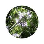 Forest Canopy (Sugar Skull) 3.5