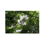 Forest Canopy (Sugar Skull) Rectangle Magnet