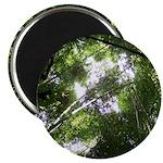 Forest Canopy (Sugar Skull) Magnet