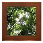 Forest Canopy (Sugar Skull) Framed Tile
