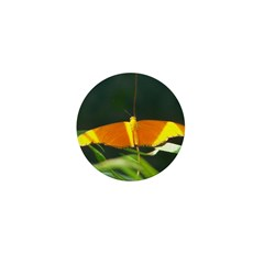 Dryas Julia Mini Button