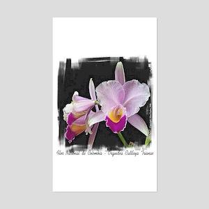 Orquidea Cattleya Trianae Rectangle Sticker