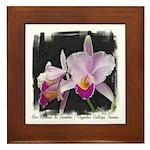 Orquidea Cattleya Trianae Framed Tile