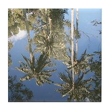 Reflected Palms Tile Coaster