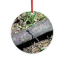 Blue Dragonfly in Bogota Ornament (Round)