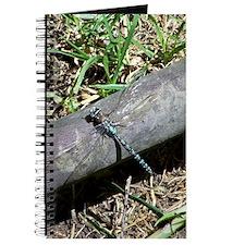 Blue Dragonfly in Bogota Journal