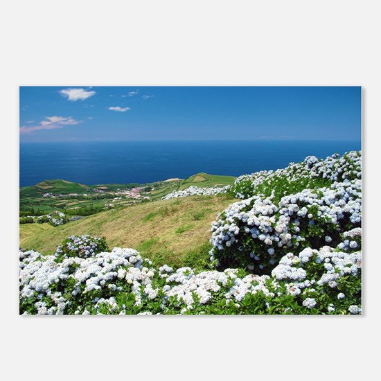 Hydrangeas everywhere Postcards (Package of 8)