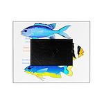 3 Damselfish Picture Frame