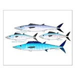4 Atlantic Mackerels Posters