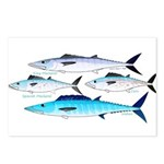 4 Atlantic Mackerels Postcards (Package of 8)