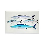 4 Atlantic Mackerels Magnets