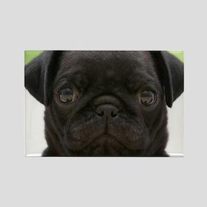 Black Pug Rectangle Magnet