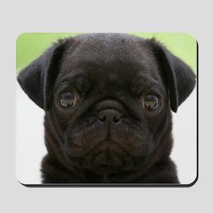 Black Pug Gifts Cafepress
