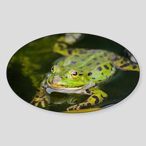 European Frog Sticker