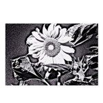 Sunflower at night Postcards (Package of 8)