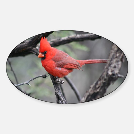 Cardinal in Sabino Canyon Decal