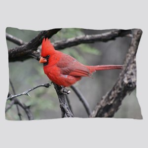 Cardinal in Sabino Canyon Pillow Case