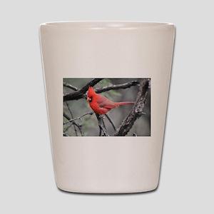 Cardinal in Sabino Canyon Shot Glass
