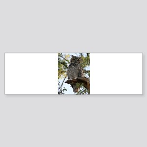 Great Horned Owl Bumper Sticker