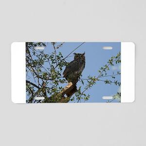 Great Horned Owl Staring Aluminum License Plate