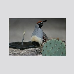 Gambels Quail in Sabino Canyon Magnets