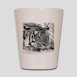 Lazy Tiger Shot Glass