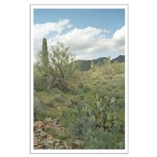 Cactus Coloring Photo Large Poster