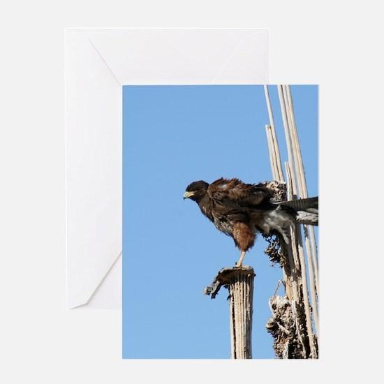 Harris Hawk Ruffling Feathers Greeting Cards