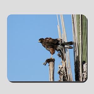 Harris Hawk Ruffling Feathers Mousepad