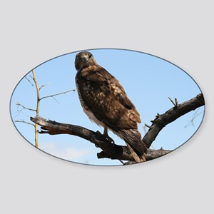 Red-tailed Hawk on tree Sticker