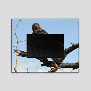Red-tailed Hawk on tree Picture Frame