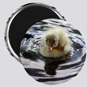 Fuzzy yellow duckling Magnet