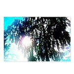Sun glare Postcards (Package of 8)