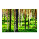 Pine forest Postcards (Package of 8)
