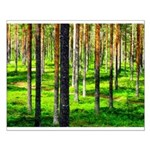 Pine forest Posters