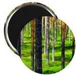 Pine forest Magnets