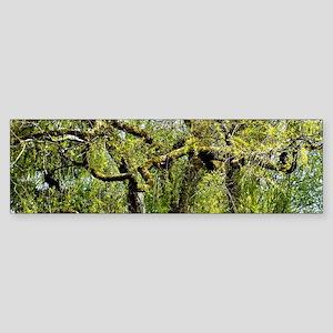 Crow Tree Bumper Sticker