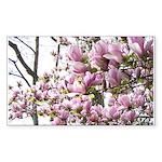 magnolia madness Sticker