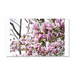 magnolia madness Car Magnet 20 x 12