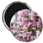 magnolia madness Magnets