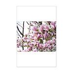 magnolia madness Poster Print