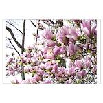 magnolia madness Poster