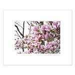 magnolia madness Small Poster