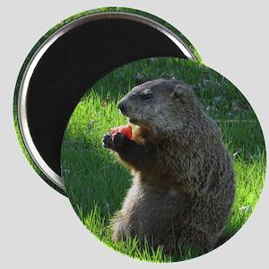 Groundhog Magnets