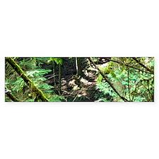 forest light Bumper Sticker