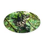 forest light Oval Car Magnet