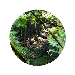 forest light 3.5