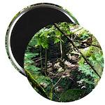 forest light Magnets