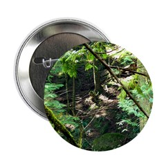 forest light 2.25