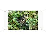 forest light Banner